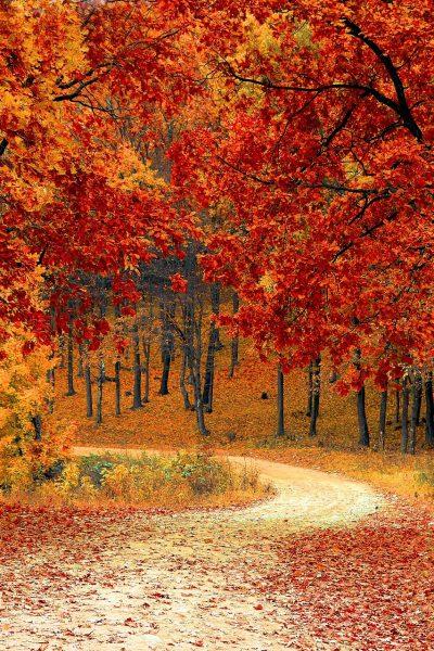 Fall is a beautiful season!