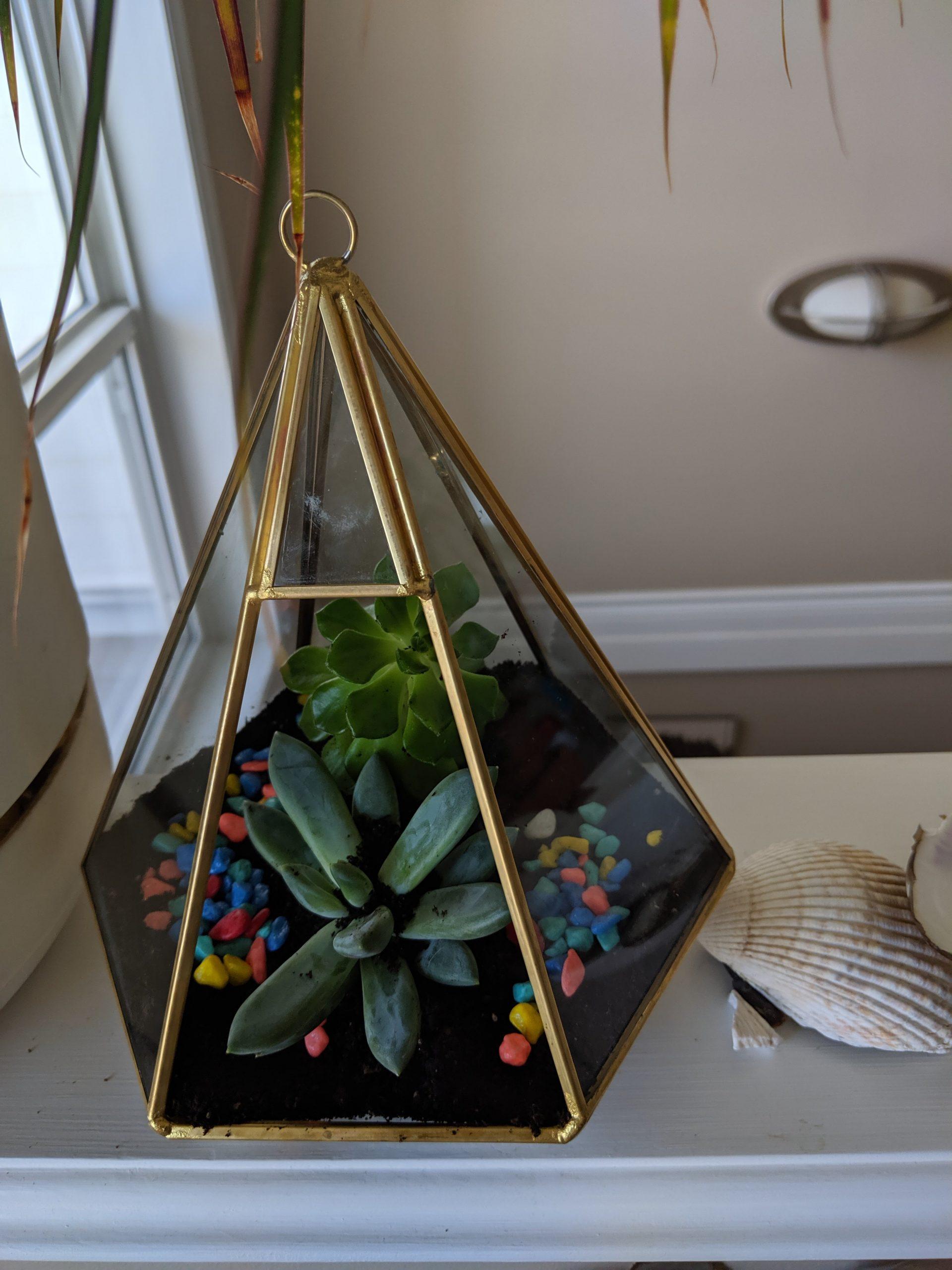 How to Make an Amazing Terrarium