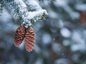 Pinecones are easy to obtain if you live where there's loads of pine trees!