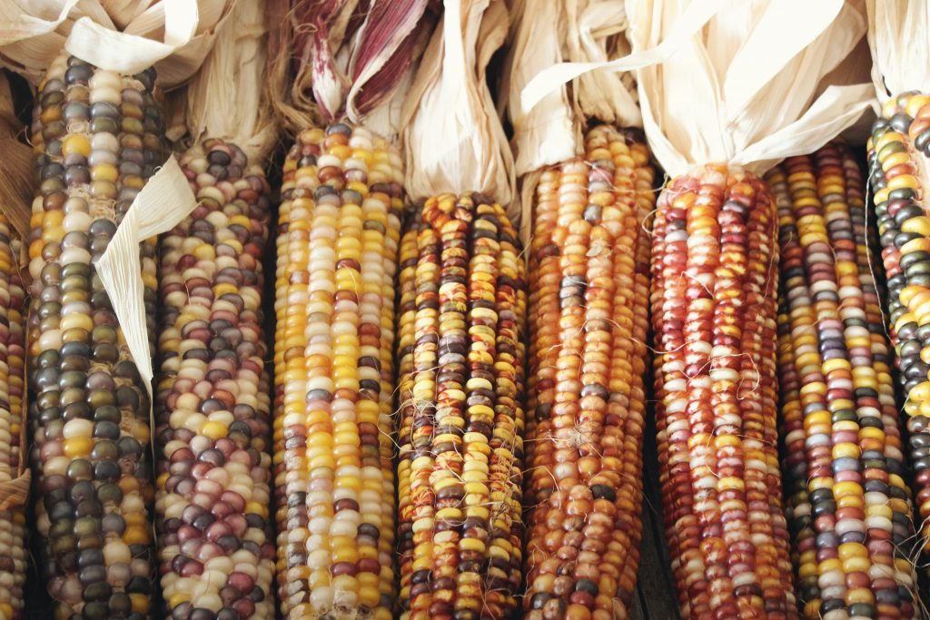 Dried corn can create a lovely fall accent!