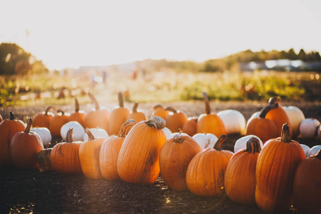 Pumpkins are a pretty common fall vegetable and they make for great decor pieces too!