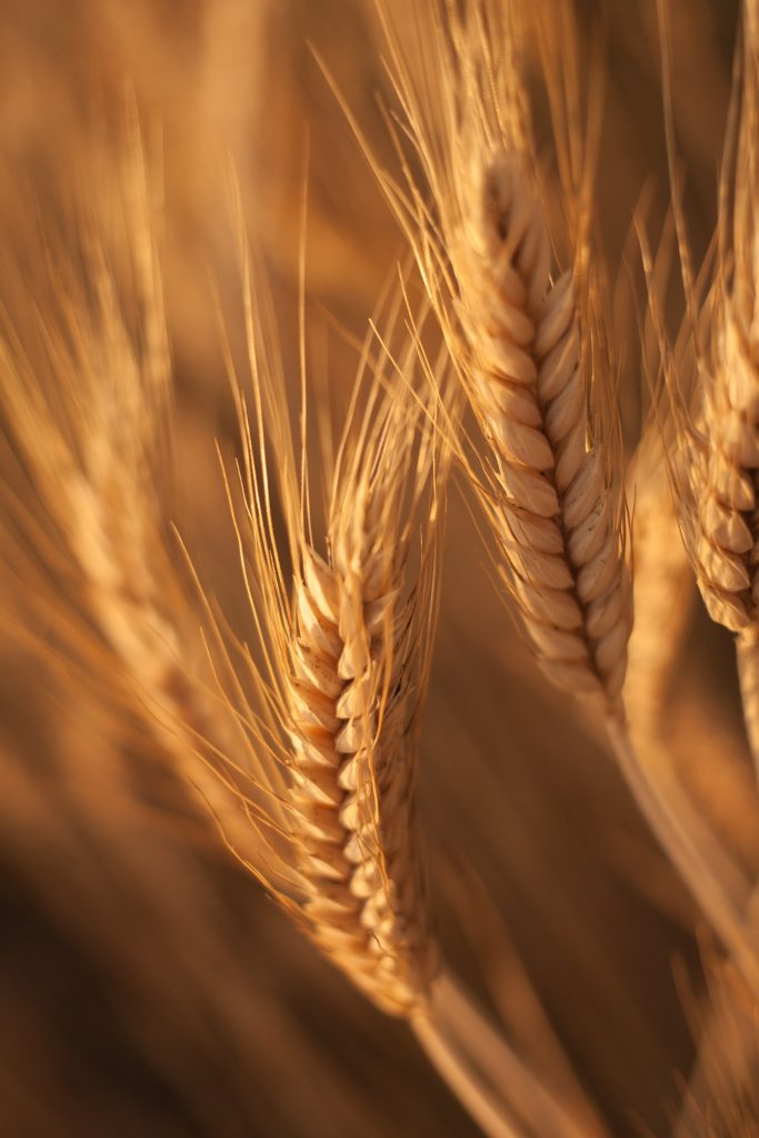 Wheat makes for a lovely texture in farmhouse style decorating!